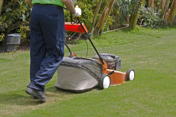 Gärtner mäht einen Rasen Rollrasen verlegen